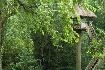 top slip tree house