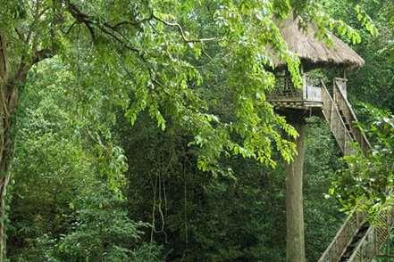 top slip tree house